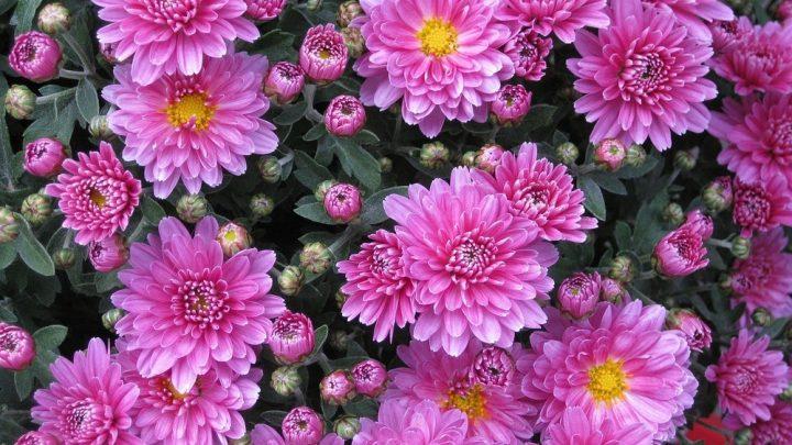 Pflanzenständer – vielseitige Dekoelemente